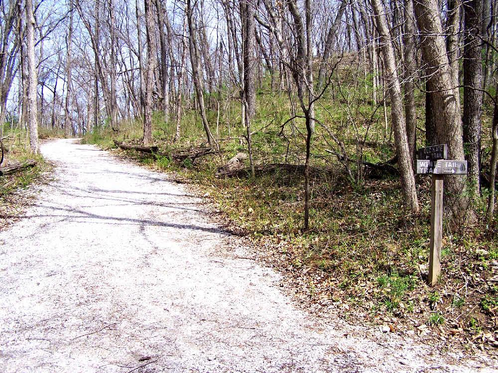 Spring Trail Walk